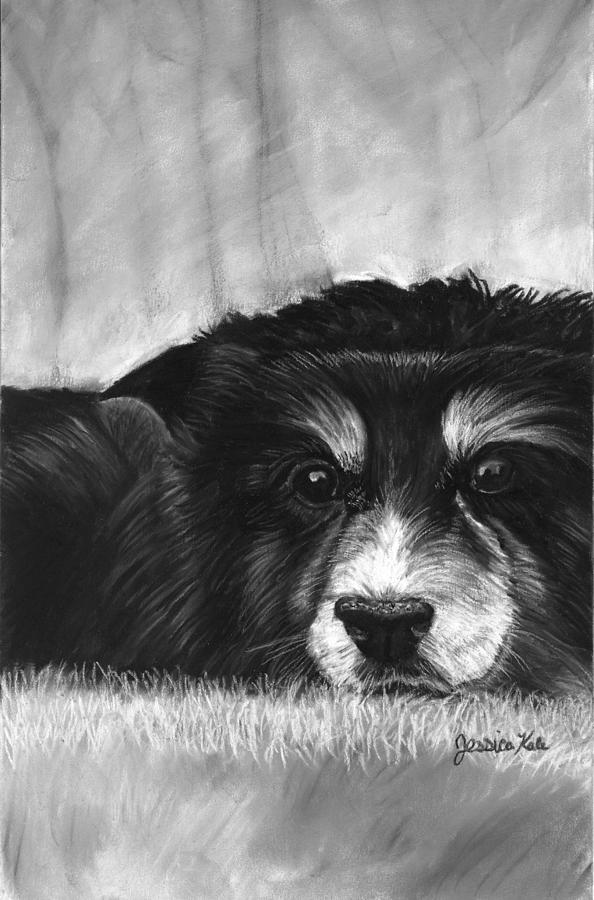 Charcoal Mixed Media - Solitary Dog by Jessica Kale