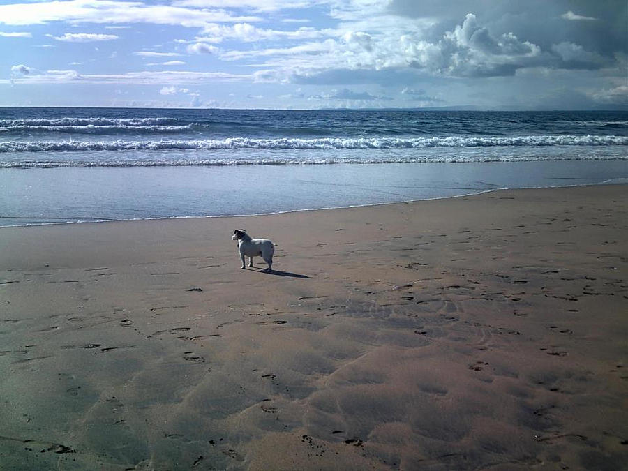 Dog Photograph - Solitary Doglooking To America by Patrick Murphy