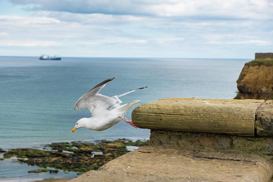 Bird Photograph - Solitary Seagull Take-off by Iordanis Pallikaras