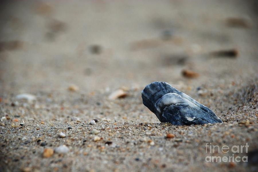 Beach Photograph - Solitary Shell by Joseph Perno