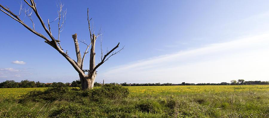 Italian Countryside Photograph - Solitary Tree by Helga Novelli