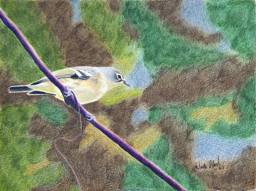Birds Painting - Solitary vireo by Wade Clark