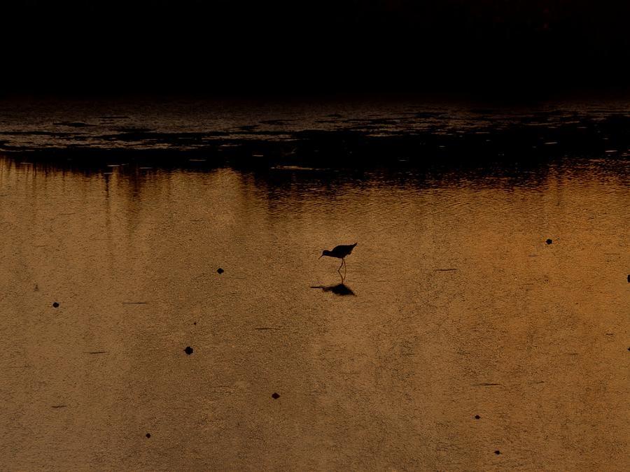 Wildlife Refuge Photograph - Solitude by Jennifer A Garcia