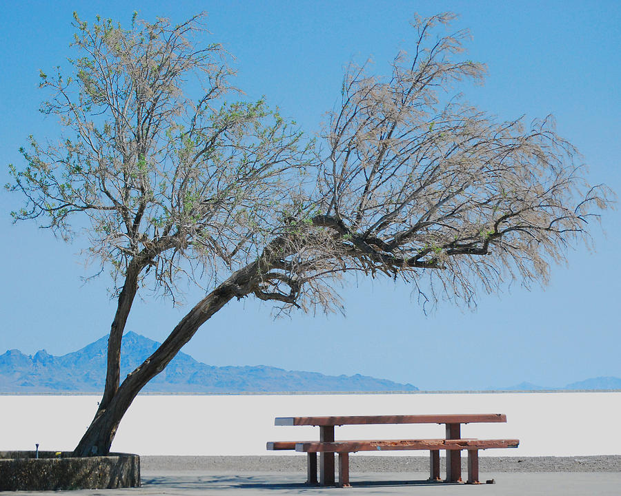 Fine Photograph - Solitude by Maggy Marsh