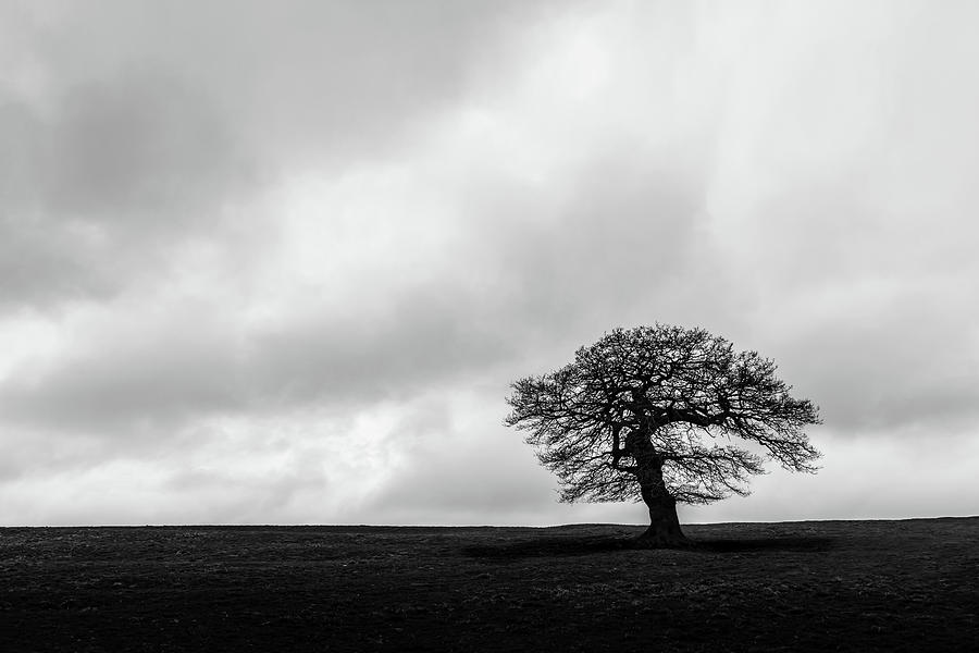 Oak Photograph - Solitude by Nick Bywater
