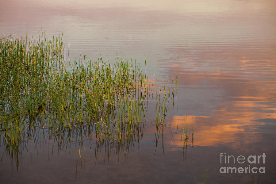 Sunrise Photograph - Solitute At The Lake by Iris Greenwell