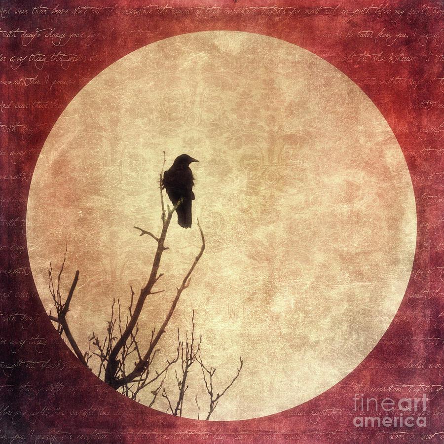 Raven Photograph - Solivagant by Priska Wettstein