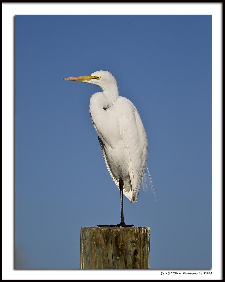 Bird Photograph - Solo Egret by Eric Moss
