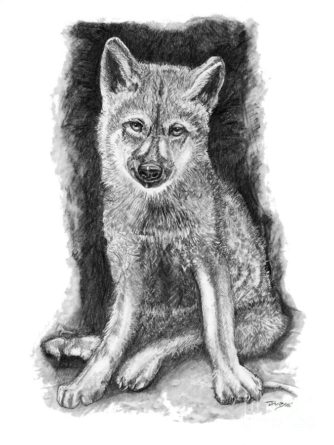 Wolves Drawing - Solo by Kevin Scott Jacobs