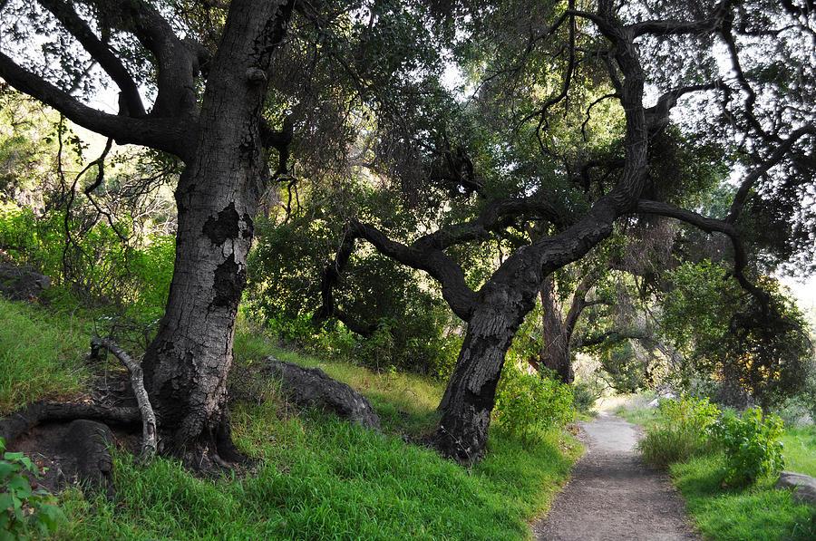 Solstice Canyon Photograph - Solstice Canyon Live Oak Trail by Kyle Hanson