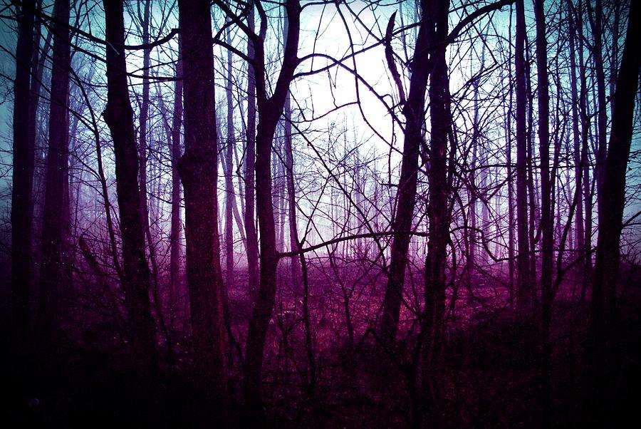 Somber beauty photograph by amy elizabeth toomey dark woods photograph somber beauty by amy elizabeth toomey m4hsunfo