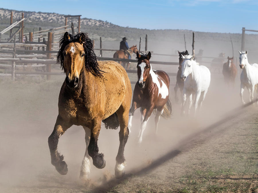Sombrero Ranch Horse Drive at the Corrals by Nadja Rider