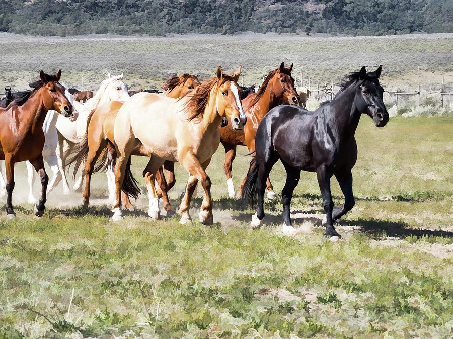Sombrero Ranch horse drive, galloping horses by Nadja Rider
