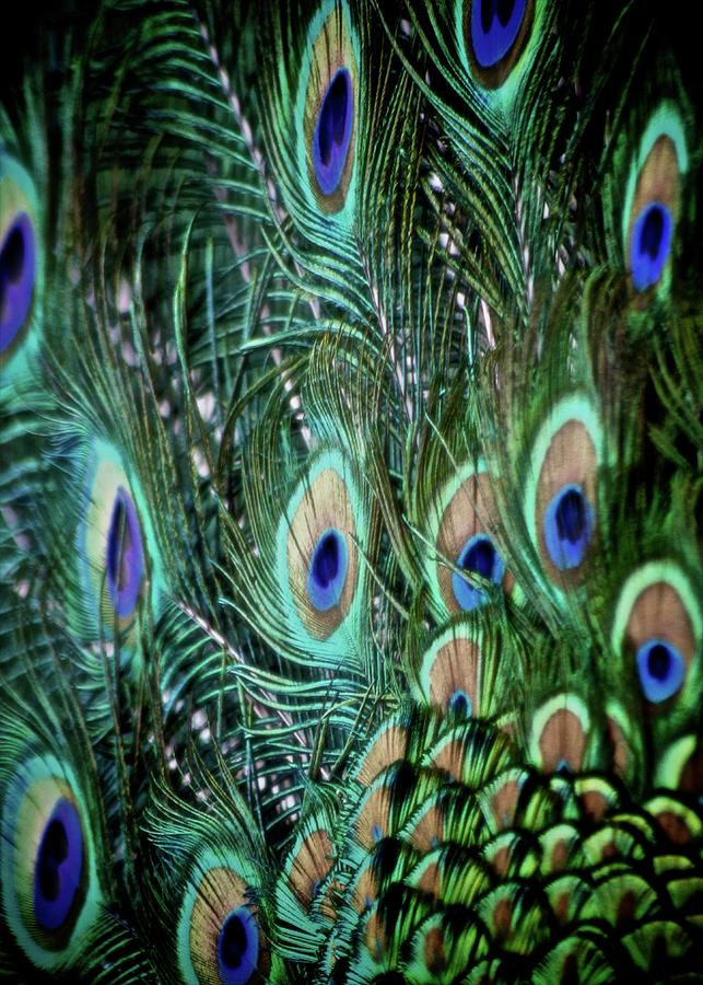 Feathers Photograph - Someone Is Watching You by Odd Jeppesen