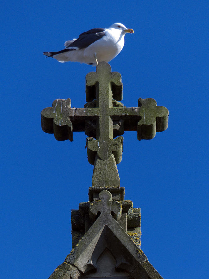Seagull Photograph - Sometimes by Baato
