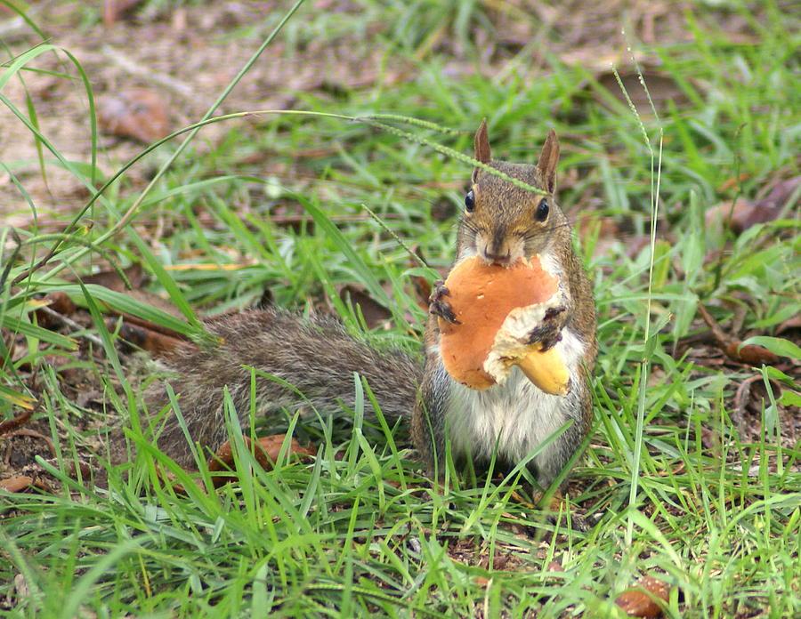 Wildlife Photograph - Sometimes I Feel Like A Mushroom by Debbie May