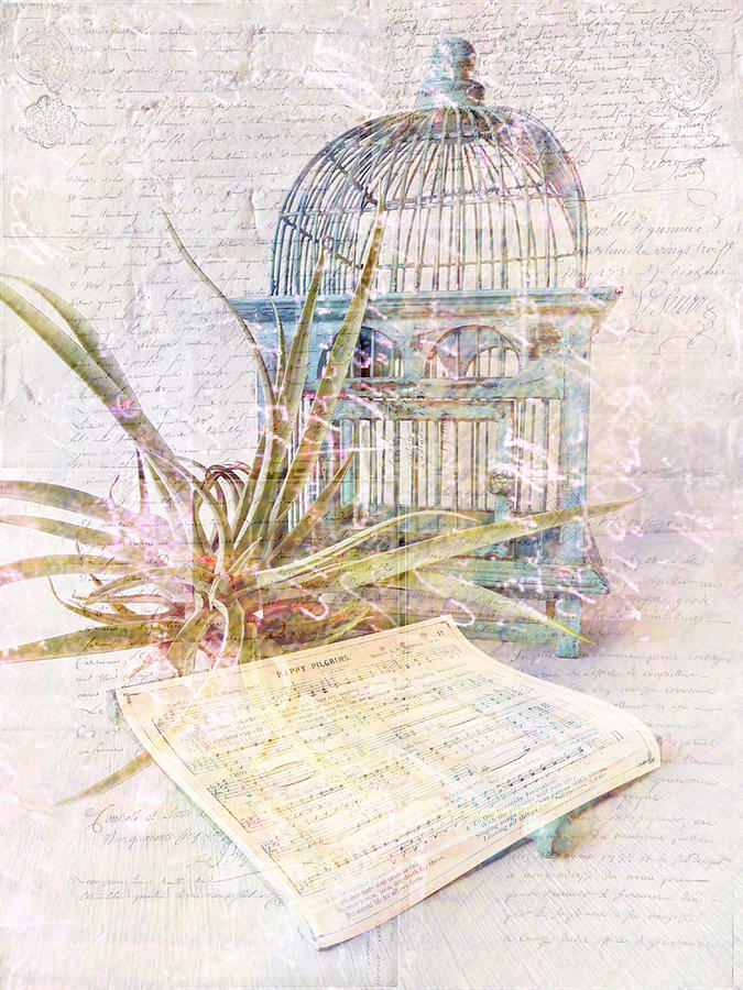 Air Plant Digital Art - Song For Freedom by Sarah Vernon
