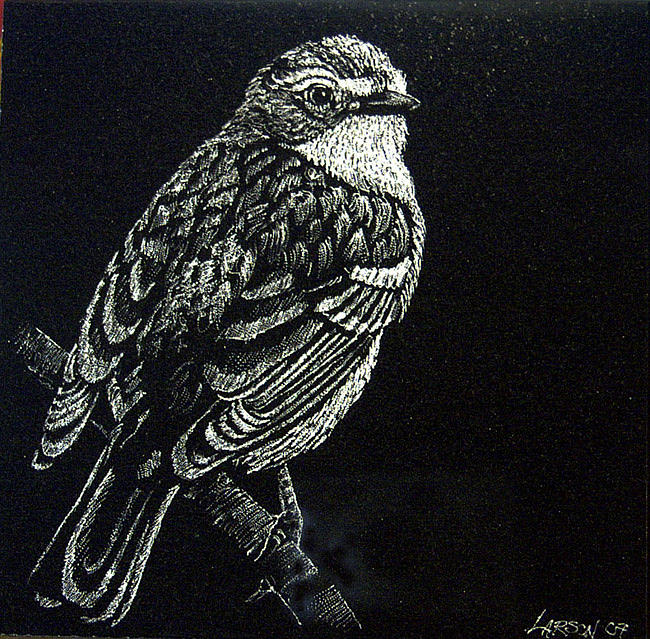 Bird Drawing - Song Sparrow by Ric Larson