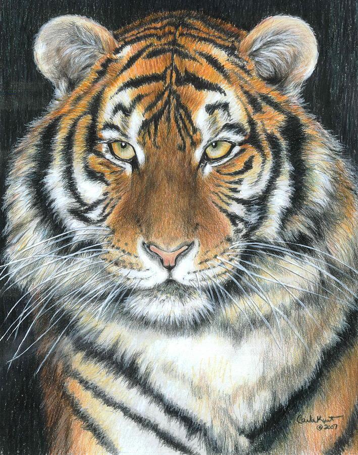 Tiger Drawing - Songha by Carla Kurt