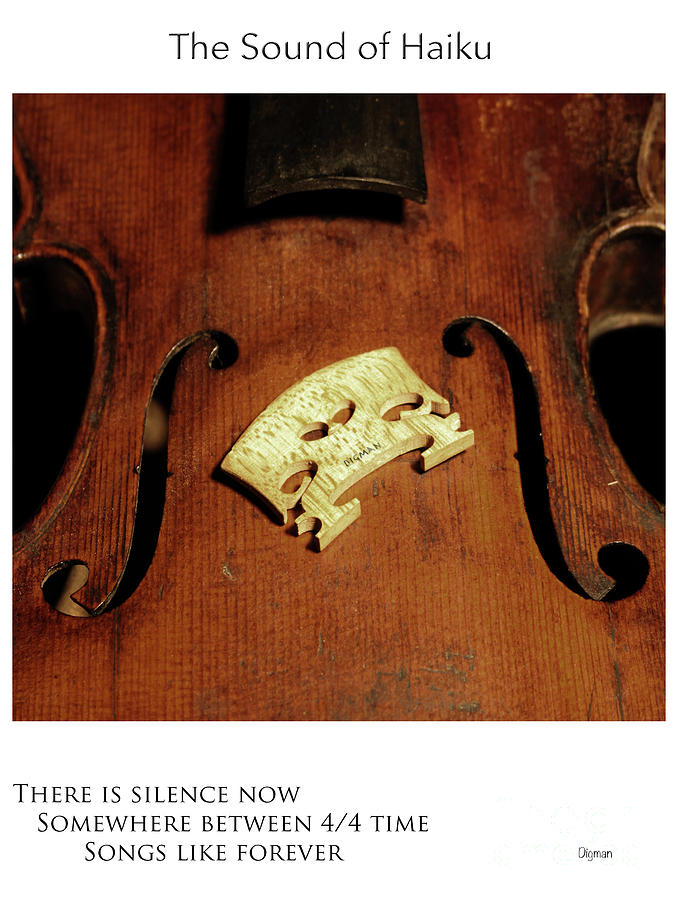 Violin Photograph - Songs Like Forever  by Steven Digman