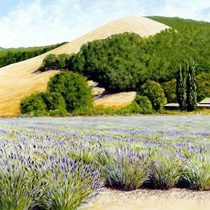 Sonoma County Lavender Painting by Bill Gittins