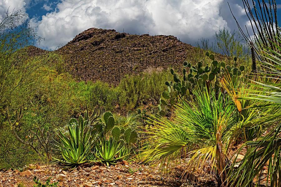 Sonoran Desert Blend H1850 Photograph
