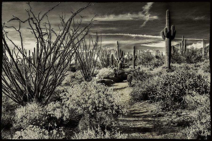 Sonoran Desert Spring by Roger Passman