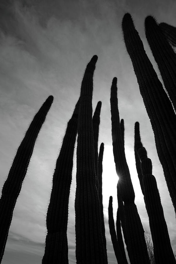 Landscape Photograph - Sonoran Spires by Robin Street-Morris