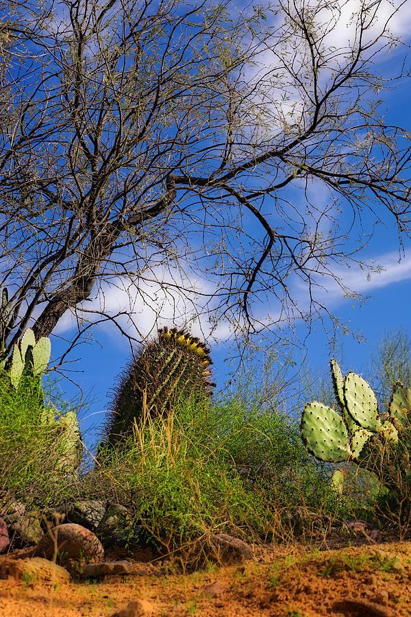 Sonoran Warmth V05 Photograph