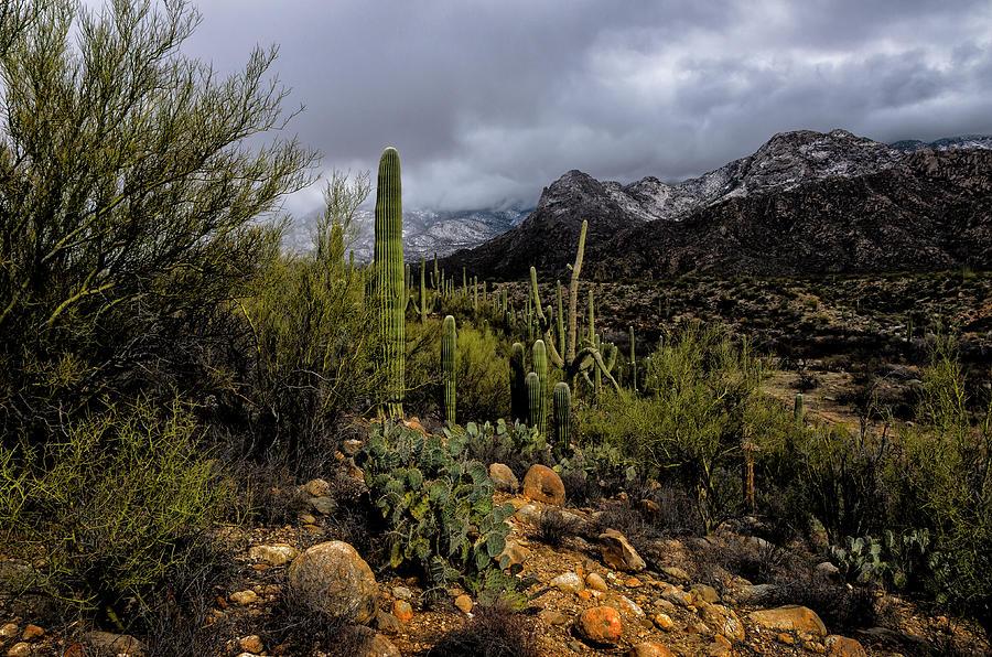 Sonoran Winter No.1 by Mark Myhaver