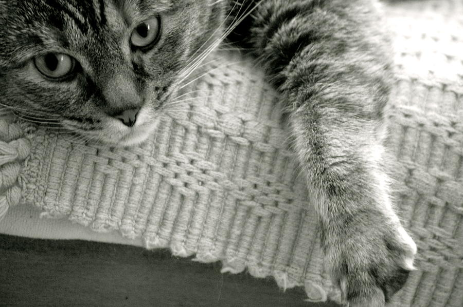 Kitten Photograph - Sophie by Erica Laucella