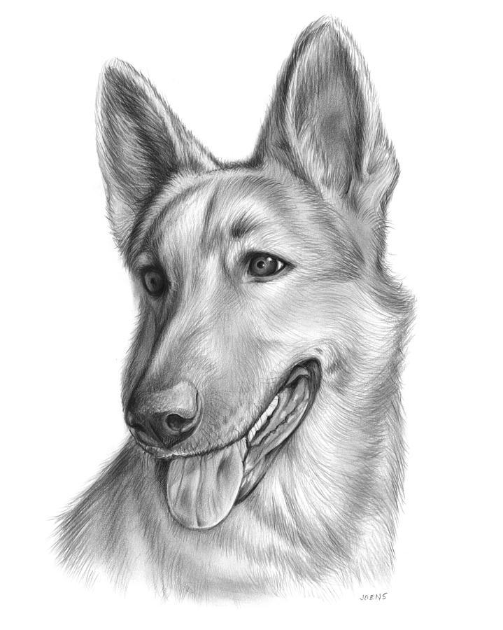 Dog Drawing - Sophie by Greg Joens