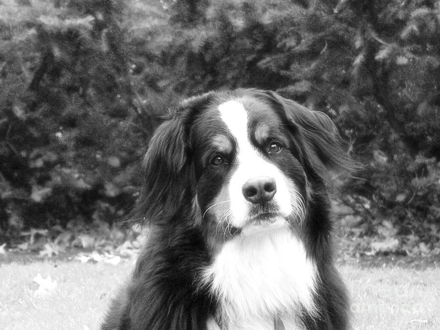 Dog Photograph - Sophie - In Infrared Black And White by Kathy Kavanagh