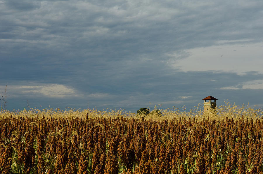 Sorghum and Observation Tower, Antietam Battlefield, Sharpsburg, Maryland, O by James Oppenheim