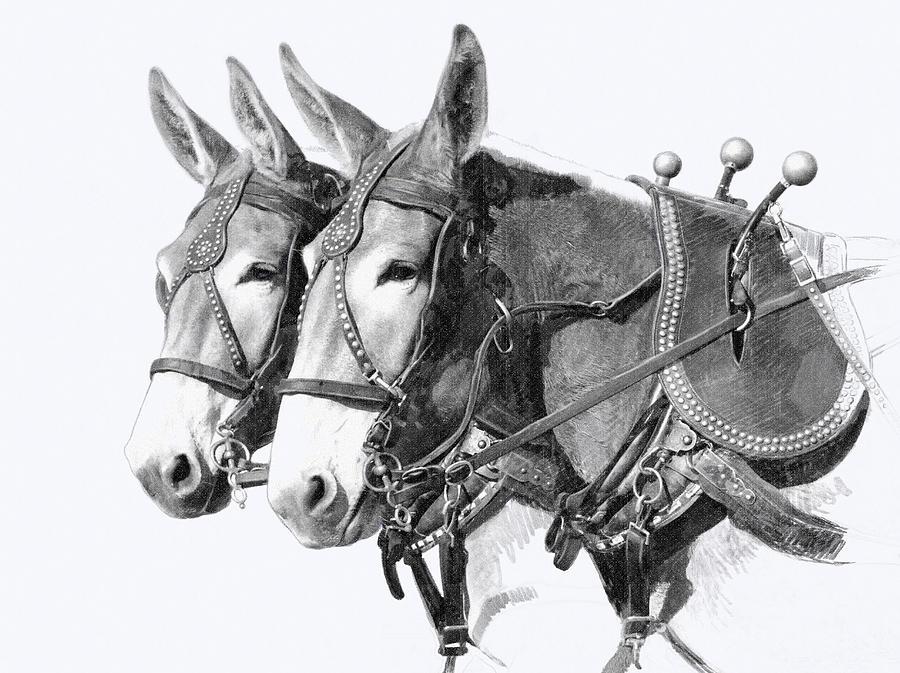 Draft Drawing - Sorrel Mule Team by Bethany Caskey