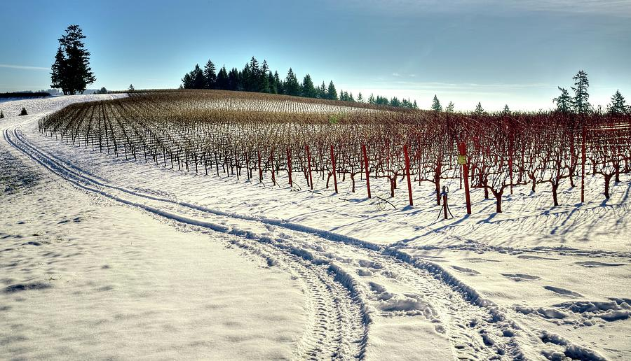 Soter Vineyard Winter Photograph