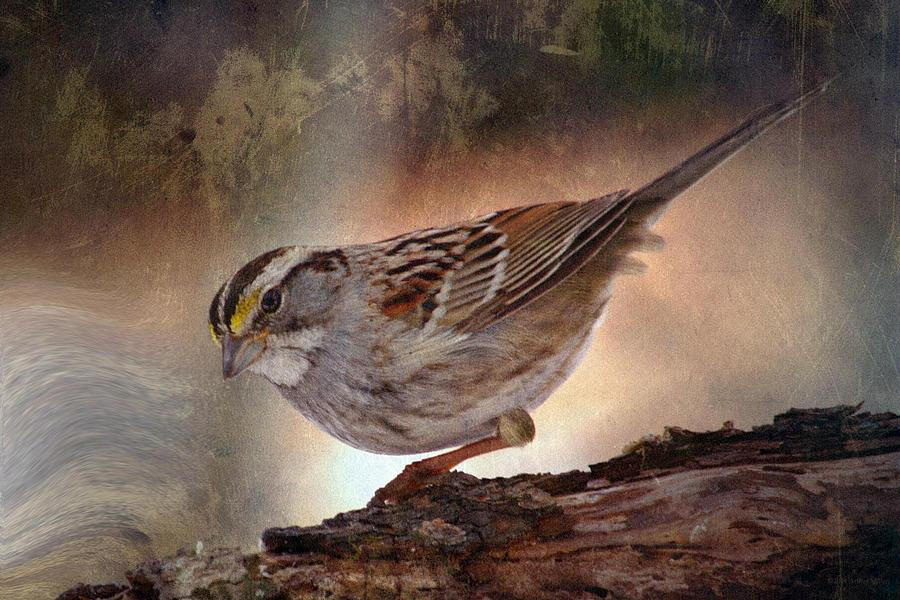 Sparrow Photograph - Soul Catcher...   by Arthur Miller