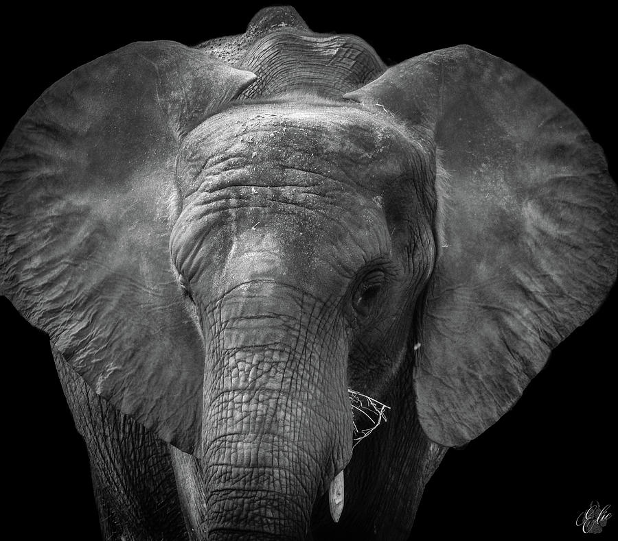Nature Photograph - Soul Of The Planet, No. 11 by Elie Wolf