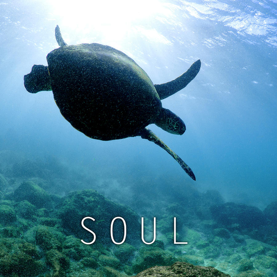 Under Water Photograph - Soul. by Sean Davey