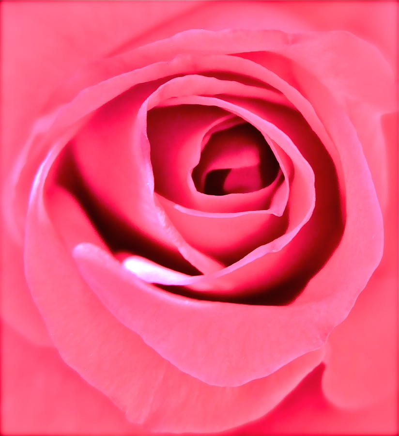 Pink Rose Photograph - Soul Searching by Gwyn Newcombe