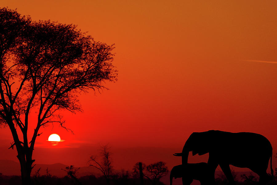 South African Sunset Photograph By Lorraine Kourafas-6129