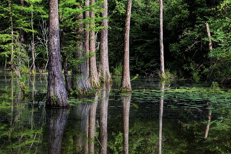 Southern Photograph - South Alabama Serenity by JC Findley