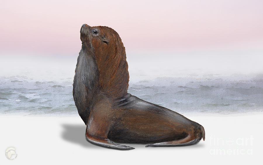 South American Fur Seal Arctocephalus Australis Male - Marine - Seebaer Painting