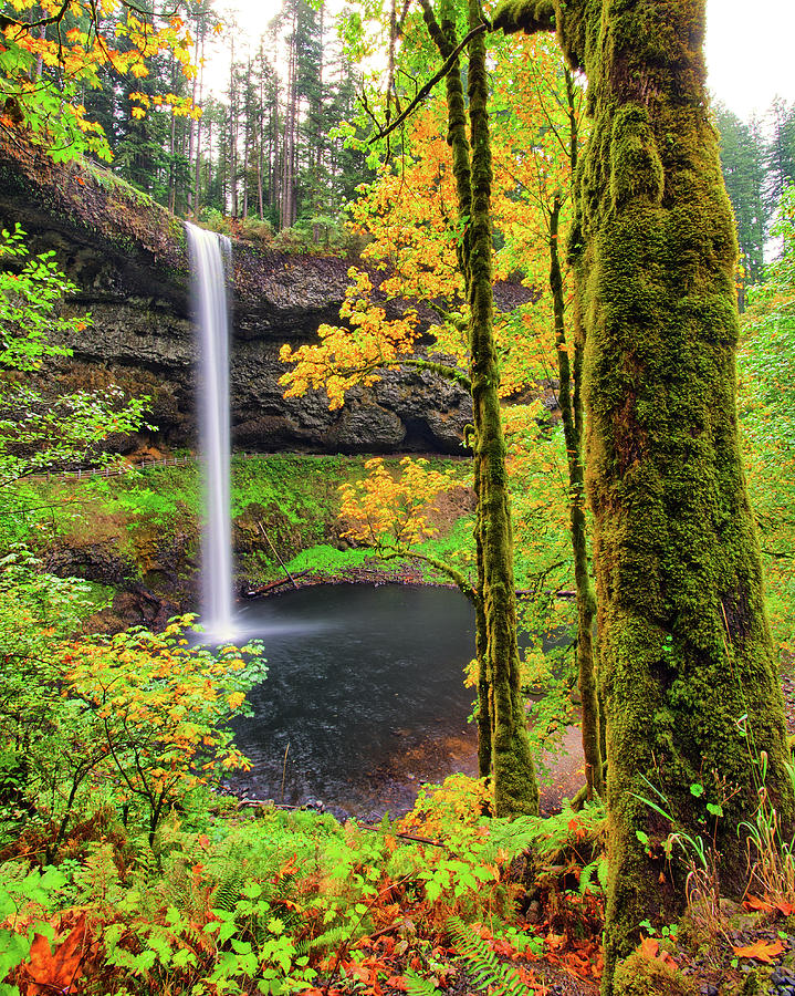 South Silver Falls by Jedediah Hohf