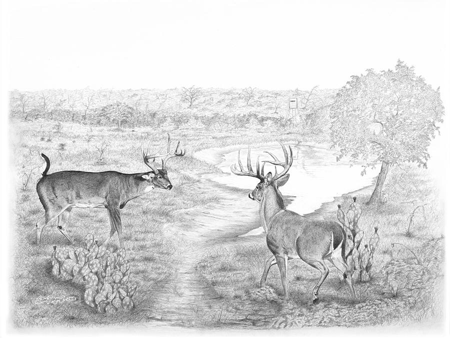 Whitetail Drawing - South Texas Stand Off by Steve Maynard