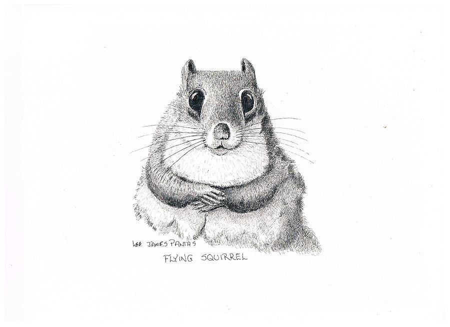 Squirrel Drawing - Southern Flying Squirrel by Lee Pantas