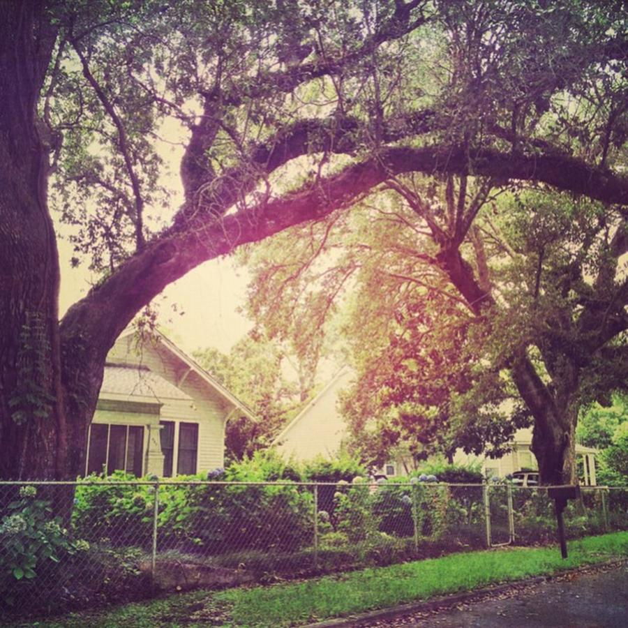 House Photograph - Southern Home #house  #coastalbeauty by Joan McCool