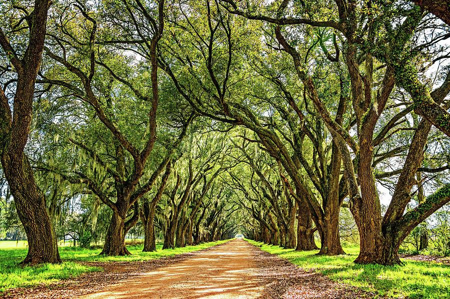 Evergreen Plantation Photograph - Southern Lane 5 by Steve Harrington