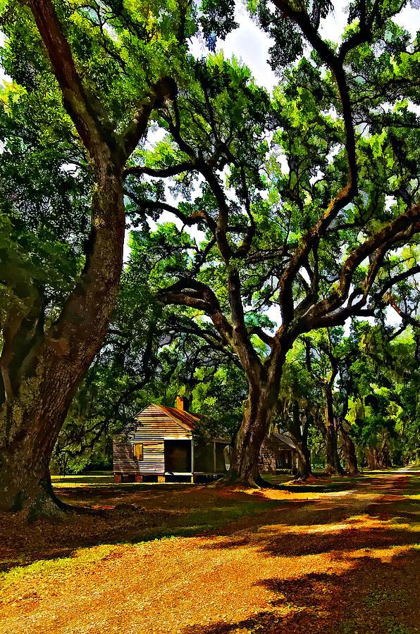 Evergreen Plantation Photograph - Southern Lane by Steve Harrington