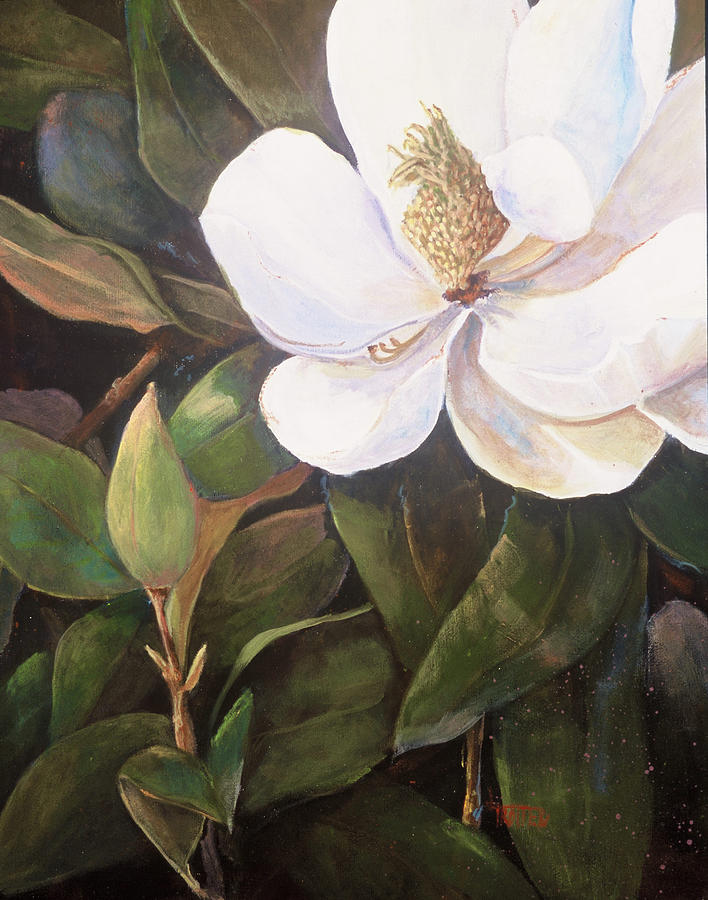Floral Painting - Southern Magnolia by Jimmie Trotter